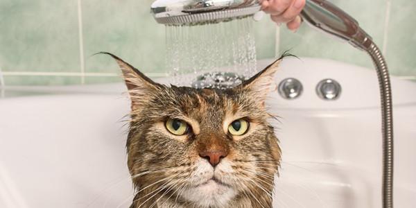 Kediler Neden Suyu Sevmez ?