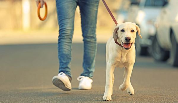 Köpekler Nasıl Gezdirilmeli?