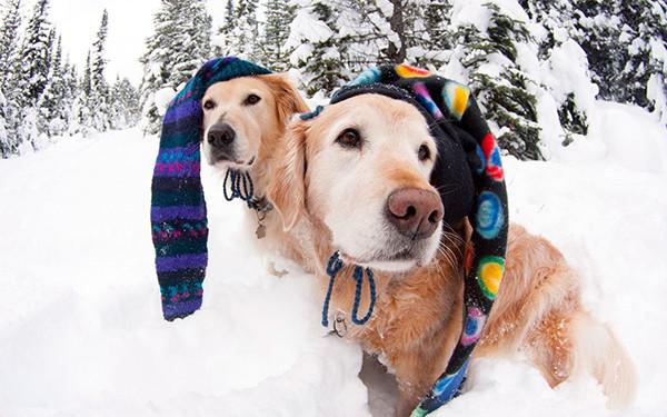 Köpeğiniz İçin 15 Kış Bakımı Önerisi