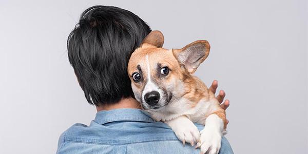 Bazı Köpekler Neden Nesnelerden Korkarlar?