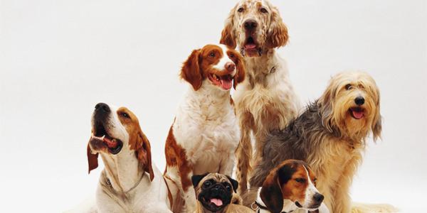 Köpeğinizin Vücut Dili