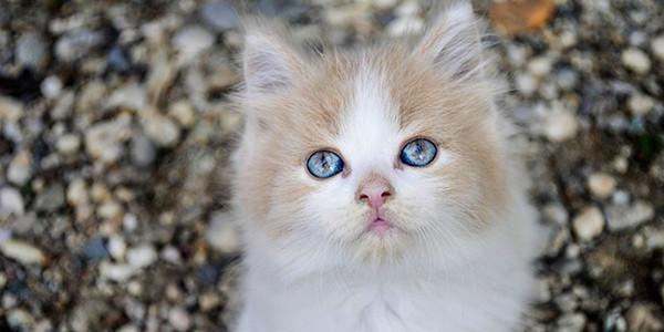 Kedi Mamalarında Lif Neden Önemlidir?