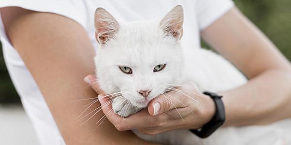 Kediler Süt İçebilir mi?