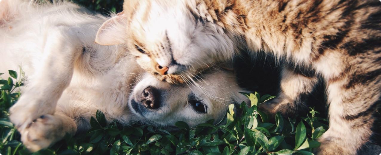 Kedi Türleri ve Cinsleri Nelerdir?